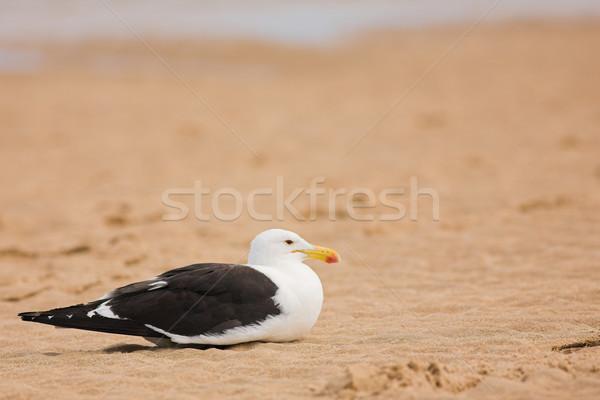 Seagull #11 Stock photo © Forgiss
