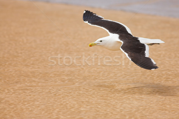 Seagull #6 Stock photo © Forgiss
