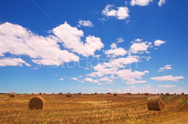 Golden bales of hay on the lands Stock photo © Forgiss