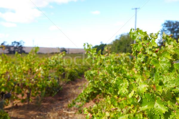 Сток-фото: западной · зеленый · Солнечный · Blue · Sky · день · ЮАР