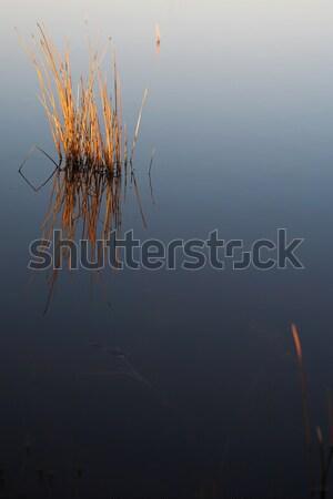 Flyfish #36 Stock photo © Forgiss