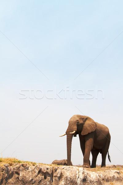 Foto stock: Elefante · africano · grande · bancos · río · Botswana