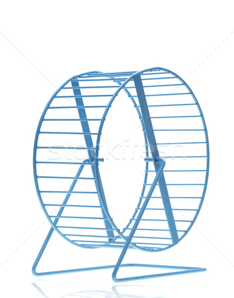 Blue hamster wheel Stock photo © forgiss