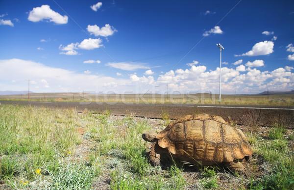 черепаха поездку африканских ходьбе дороги ЮАР Сток-фото © Forgiss