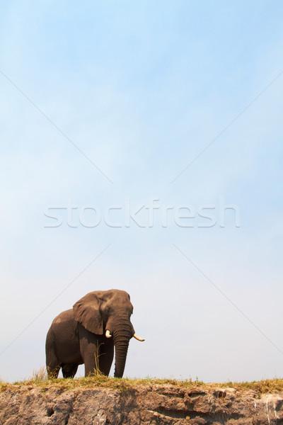 Majestic African Elephant Stock photo © Forgiss