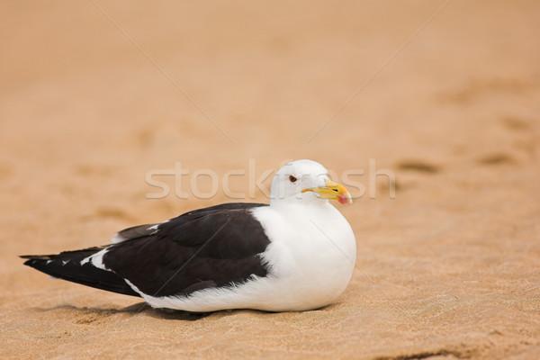 Seagull on the beach Stock photo © Forgiss