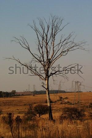枯れ木 自然 リザーブ 冷たい 茂み ストックフォト © Forgiss