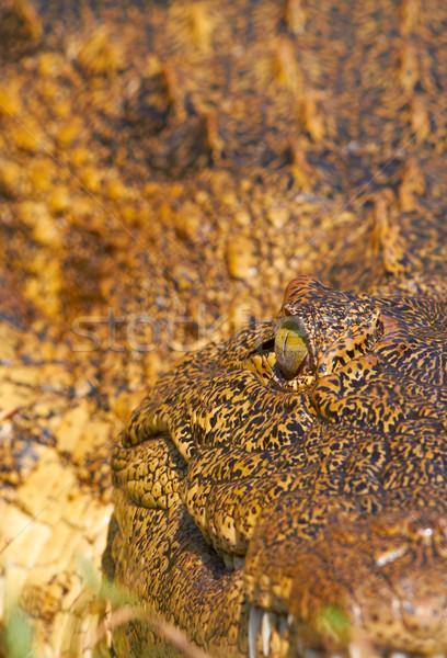 Crocodile eye Stock photo © Forgiss