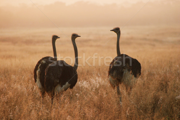 Trois permanent sunrise herbe oiseau vacances Photo stock © Forgiss