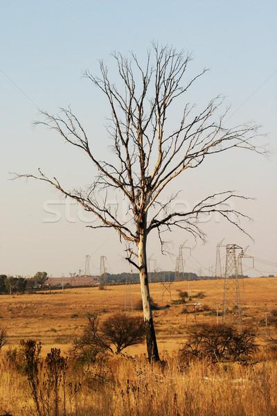 枯れ木 電気 自然 リザーブ 業界 冷たい ストックフォト © Forgiss