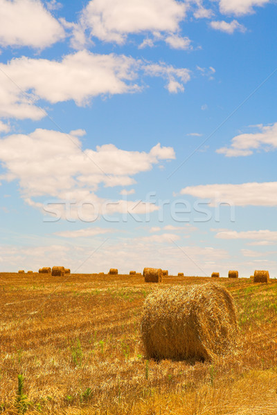 Straw bales on a harvested wheat field Stock photo © Forgiss