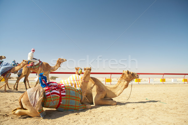 Robot camel racing Stock photo © Forgiss