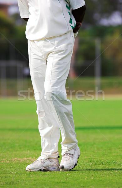 Cricket #2 Stock photo © Forgiss