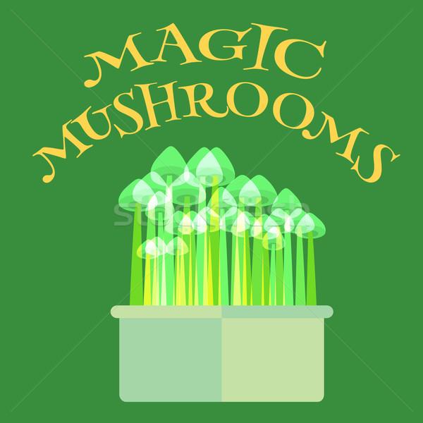 Psilocybin mushrooms grow kit Stock photo © Fosin