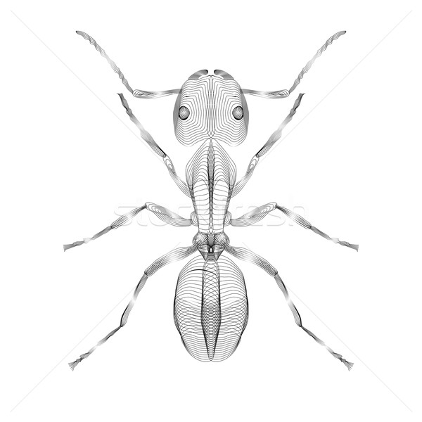 Ant. 3d style vector illustration for print tatto t-shirt. Stock photo © Fosin
