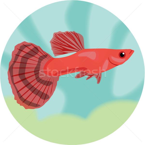 Stok fotoğraf: Ayrıntılı · akvaryum · balık · eps · 10