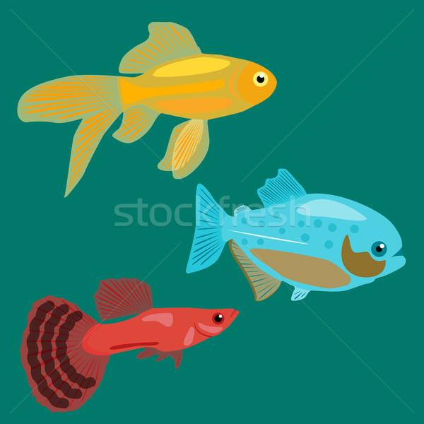 Stock photo: Aquarium fish. Goldfish, Piranha, Guppy