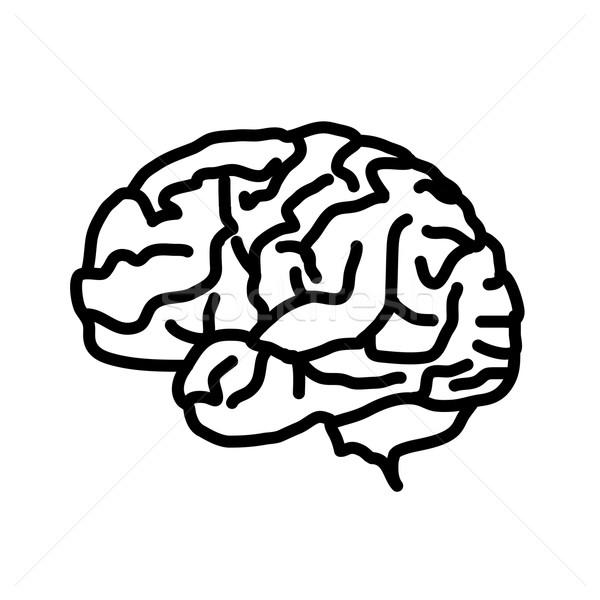 Beyin ikon yalıtılmış beyaz vektör eps Stok fotoğraf © Fosin