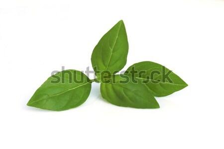 バジル 白 食品 健康 工場 食べ ストックフォト © Fotaw