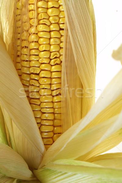 corn Stock photo © Fotaw