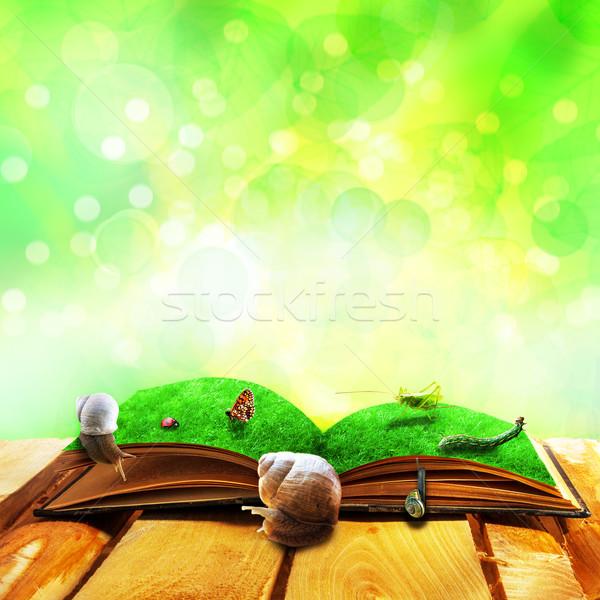 Otwarte starej książki magic zwierząt papieru wiosną Zdjęcia stock © fotoaloja