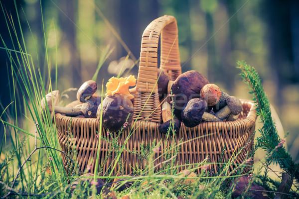 Mand vol eetbaar champignons bos licht Stockfoto © fotoaloja