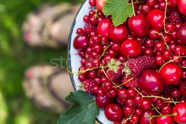 Fruit bowl full cherries currants Stock photo © fotoaloja