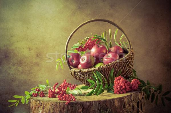 A basket full apples rowan sunset Still Life Stock photo © fotoaloja