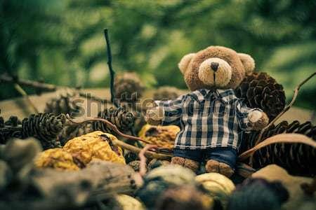 Christmas coming teddy bear green conifers cones Stock photo © fotoaloja