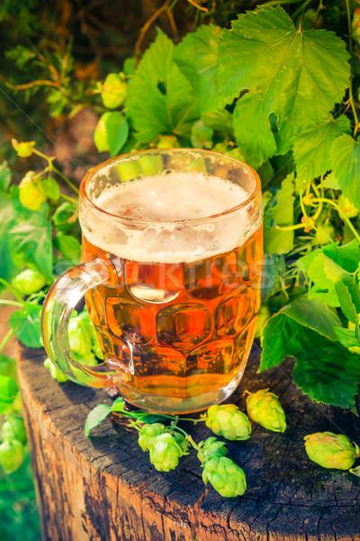 Pint gouden bier houten blad bar Stockfoto © fotoaloja