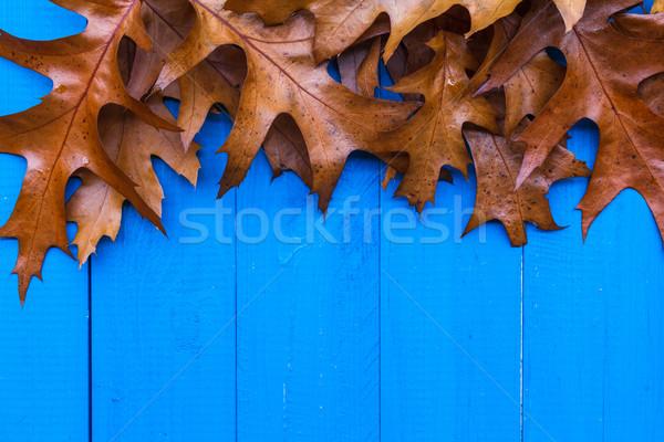 ősz levelek kék fa terv levél Stock fotó © fotoaloja