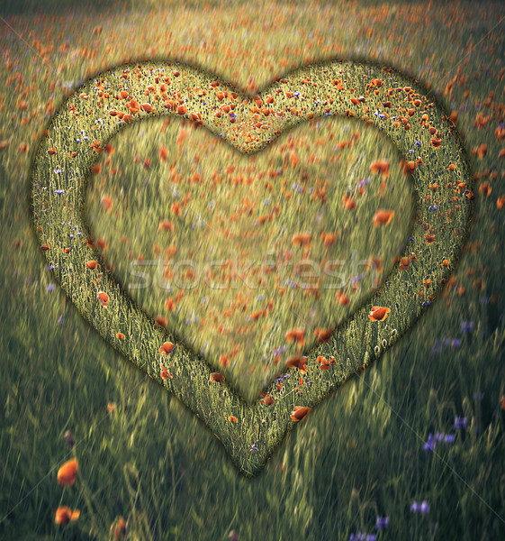 Heart frame border window meadow shape flower Stock photo © fotoaloja