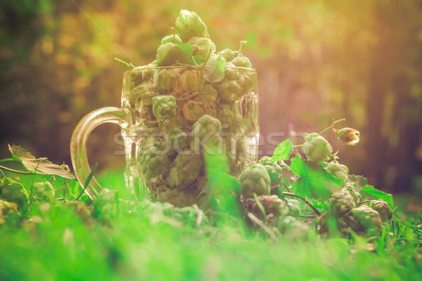 üveg bögre tele zöld komló levél Stock fotó © fotoaloja