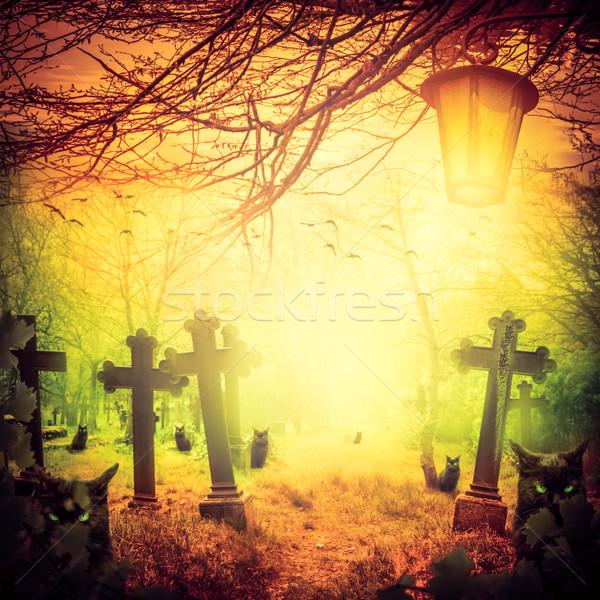Halloween ilustração noite cemitério velho gatos Foto stock © fotoaloja