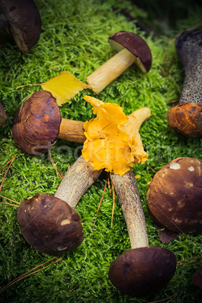 Stock photo: Edible mushrooms piled moss forest