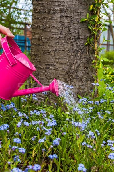завода ухода весенние цветы саду трава Сток-фото © fotoaloja