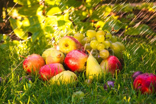 Triste autunno frutti erba sole alimentare Foto d'archivio © fotoaloja