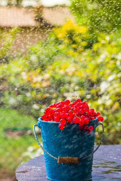red currant fruit bucket summer rain drops water wooden Stock photo © fotoaloja