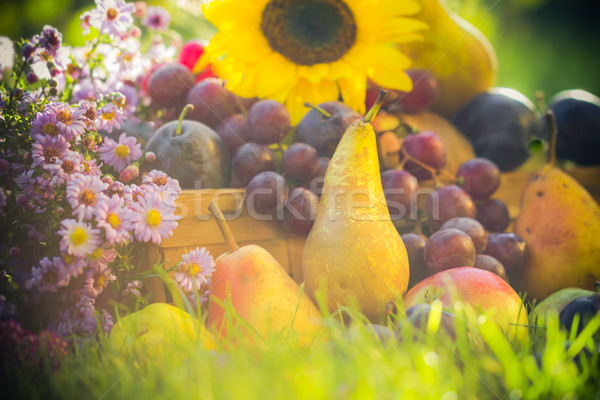 Autumn orchard fruit crops grass sunset Stock photo © fotoaloja