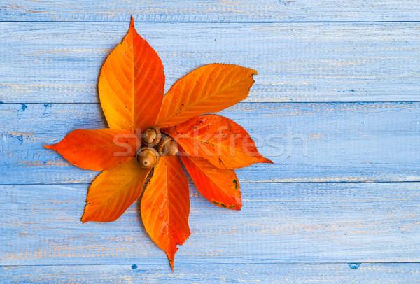 Spadek pozostawia kwiat środkowy drewna Zdjęcia stock © fotoaloja