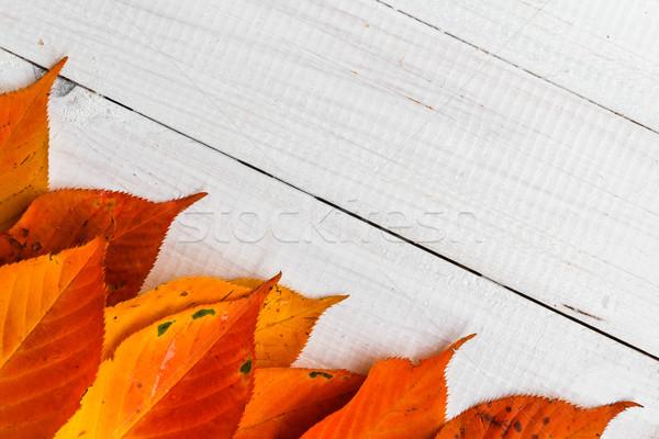 Otono ardiente naranja hojas blanco naturaleza Foto stock © fotoaloja