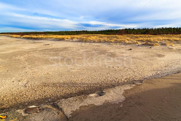 Grass covered dunes shores Baltic Sea Stock photo © fotoaloja