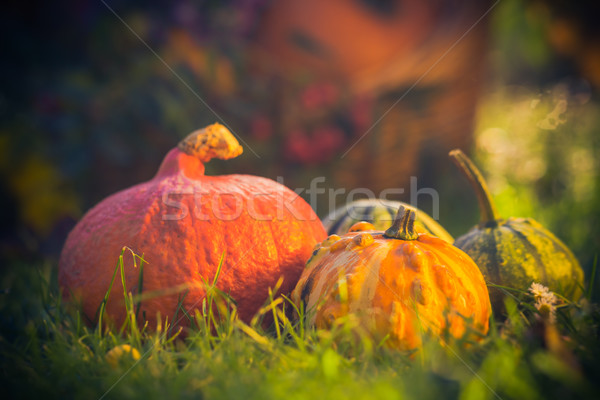 подарки осень саду корзины трава Сток-фото © fotoaloja