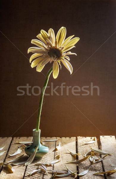 Still life white gerbera small vase Stock photo © fotoaloja