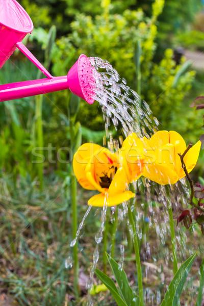 цветы весны саду лейка трава Сток-фото © fotoaloja