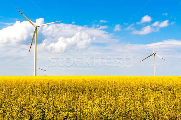 wind mill turbines farm landscape rape Stock photo © fotoaloja