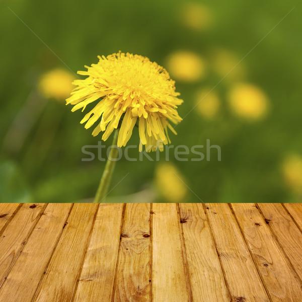 Spring background dandelion wooden parquet Stock photo © fotoaloja