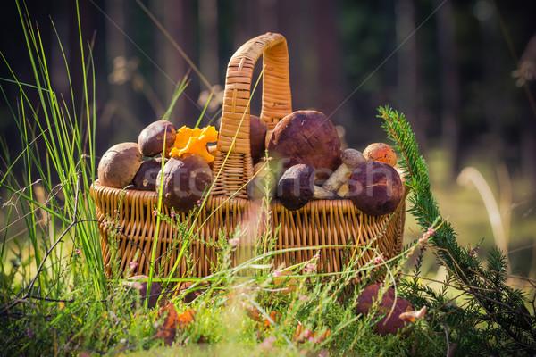 Panier plein comestibles champignons forêt lumière Photo stock © fotoaloja
