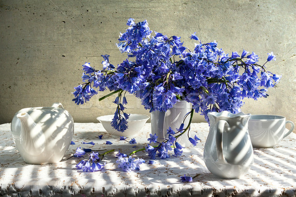 Still life bouquet blue tones white crockery Stock photo © fotoaloja