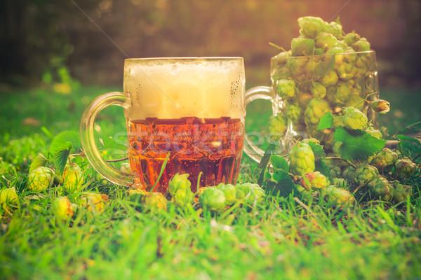 полный хмель пива два лист Бар Сток-фото © fotoaloja